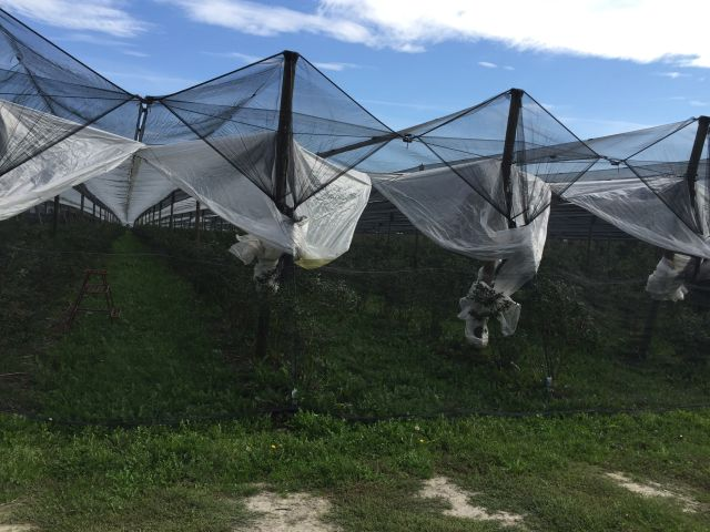 konstrukcja przeciwdeszczowa zzabezpieczeniem przedptakami