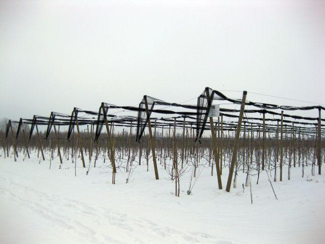 zabezpieczona siatka nakonstrukcji drewnianej